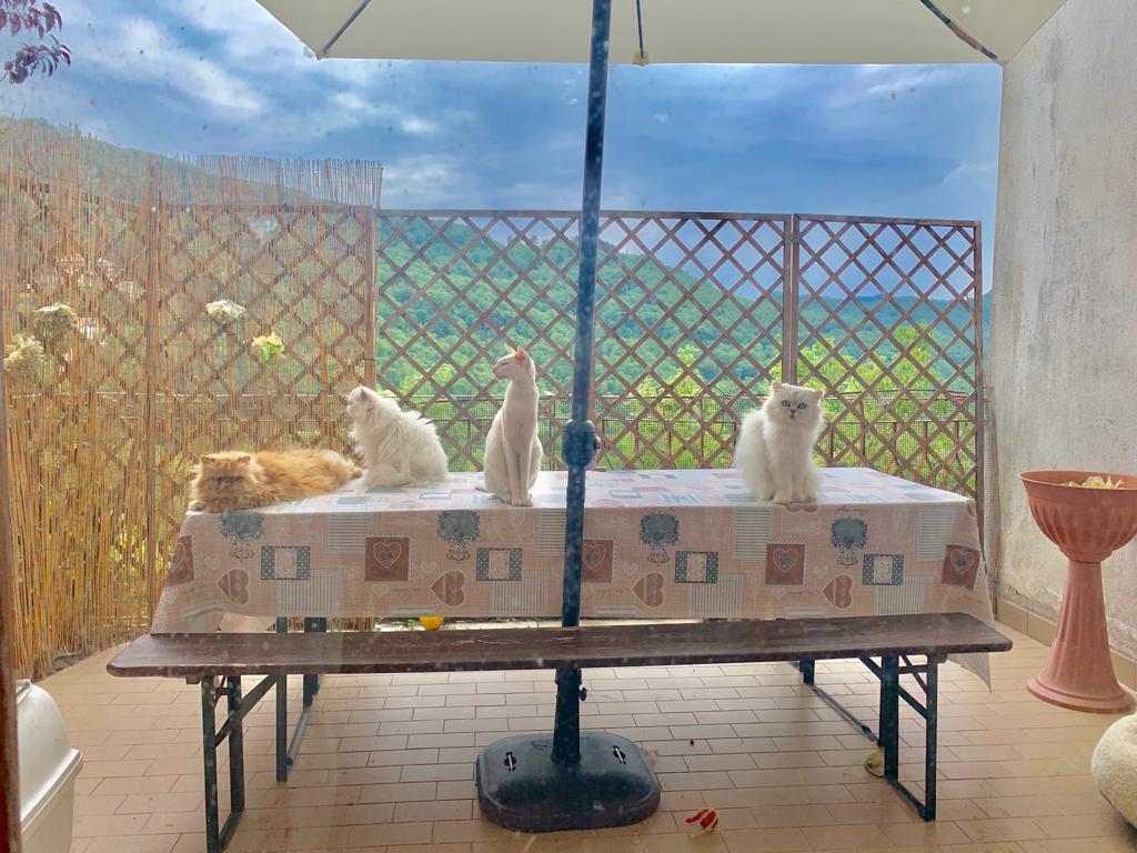 Attico indipendente in Trifamiliare con giardino e terrazzo